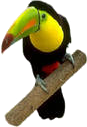 toucan sitting on a branch
